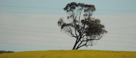 'Tree on a lean' - by Maryann Roki (13 yrs)