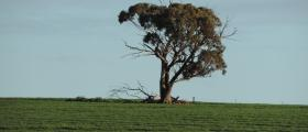 'Tree and a paddock' - by Maryann Roki (13 yrs)