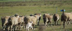 'Baby lamb' - by Angela Hankinson (34 yrs)
