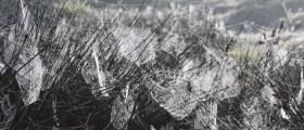 'Wheatbelt webs' - by Judd Stead (20 yrs)