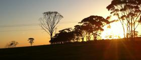 'Sunset through the trees' - by Asha Geier (13 yrs)