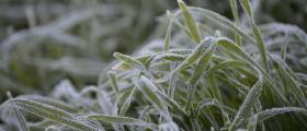 'Frosty winter mornings' - by Stephanie Kettle (32 yrs)