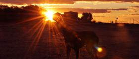 'Meg at sunset' - by Kaylea Richards (16 yrs)