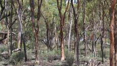 Protecting remnant bush in the Mortlock