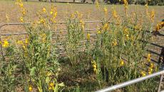 Summer pastures still going strong