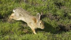 A great time for fox and rabbit baiting!