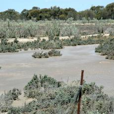 Saltland with Saltbush and Sandfires bushes in forground